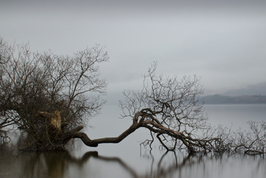 Fallen,-Loch-Lomond,-Scotland